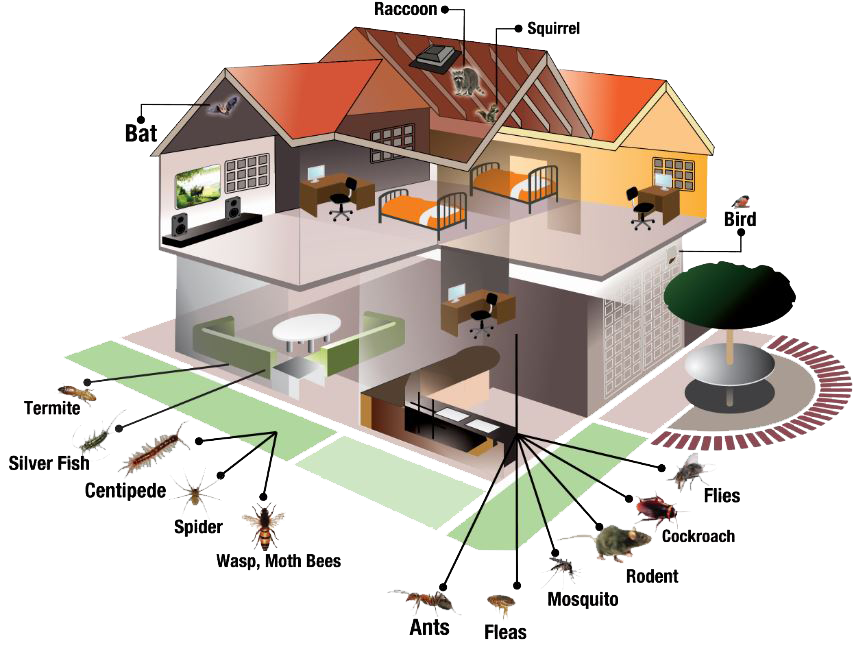 pest-inspection-and-control-online-pest-removal-guide-794059